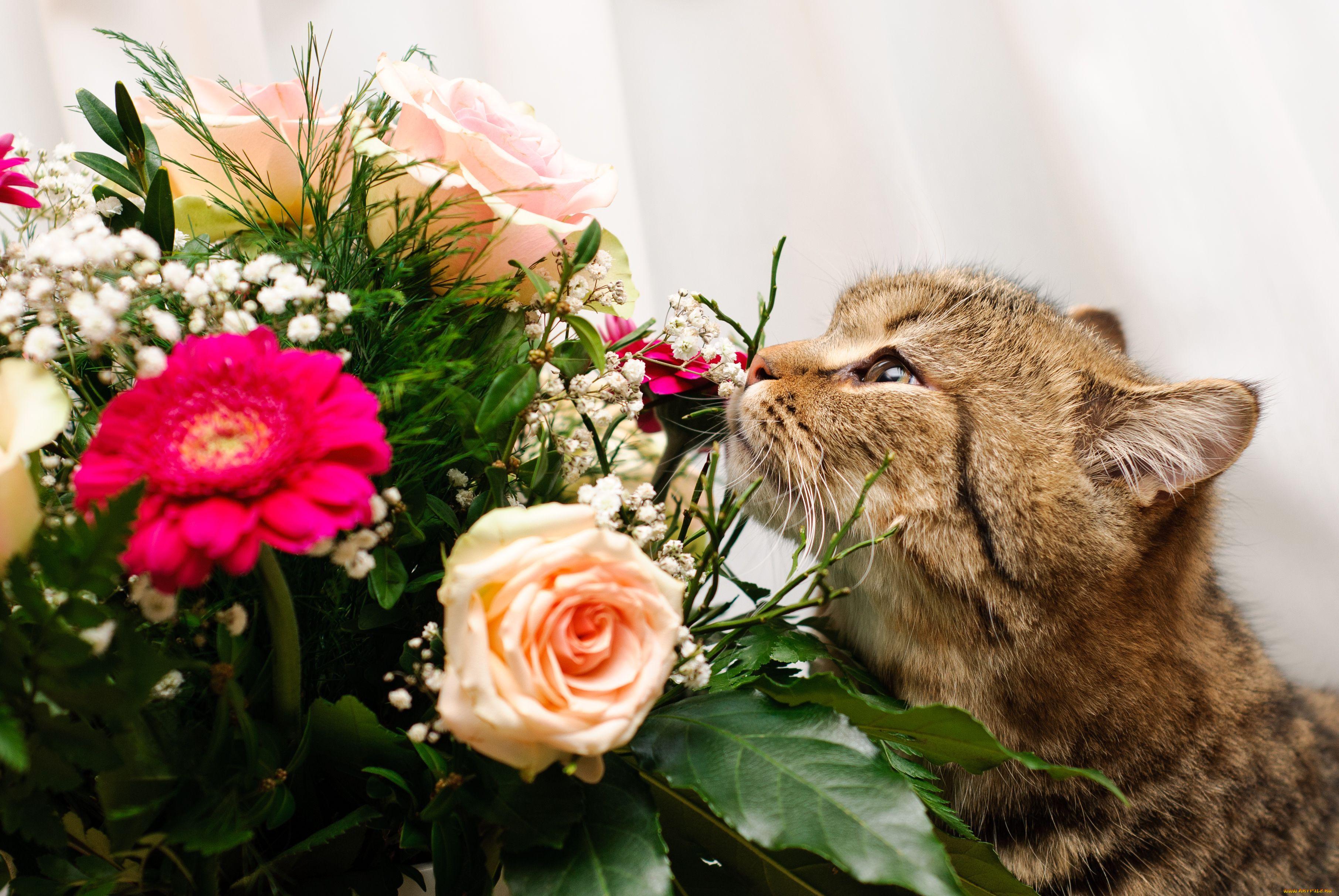 столица открытки животные с цветами событие стало